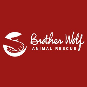 Brother_Wolf_Animal_Rescue_Asheville_300