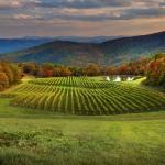 Visit NC Wineries this Fall