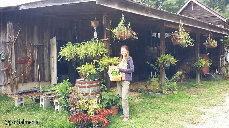 asheville farm girl barn