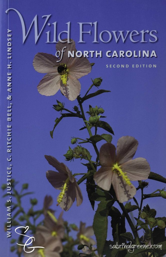 Wildflowers Western North Carolina