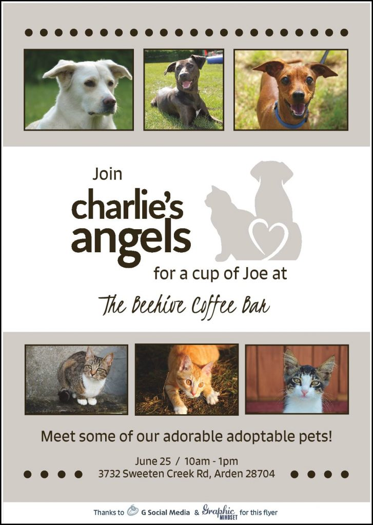 Charlie's Angels Adopt A Pet in Asheville NC