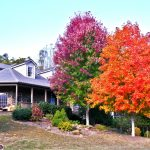 Asheville Leaf Season 2016