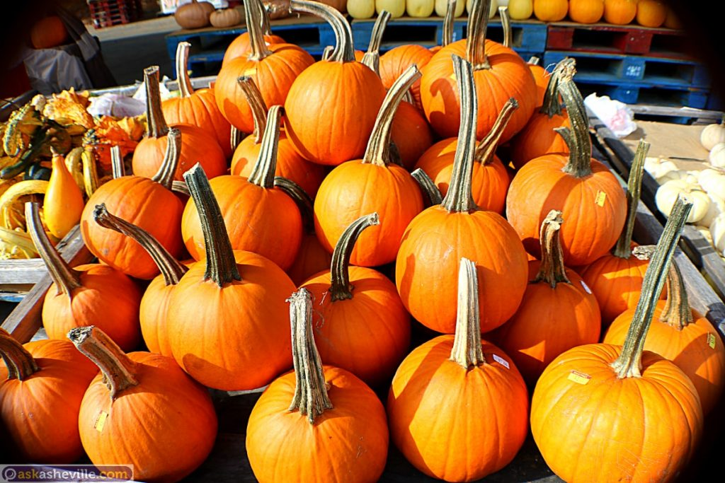 Pumpkins at WNC Farmers Market in Asheville